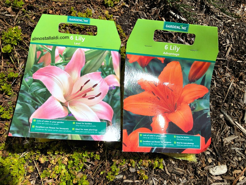 Spring bulbs are this week's ALDI impulse buy — Plus, touchscreen garden gloves? And, help me plan this space!
