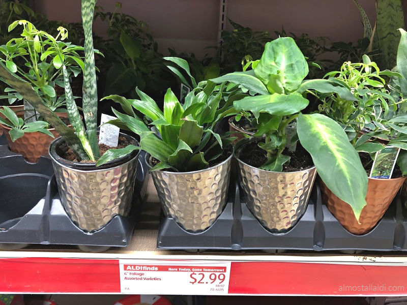 ALDI Finds Foliage — Plus Who Needs the Bagel? Seasoning, Canning Supplies, and more