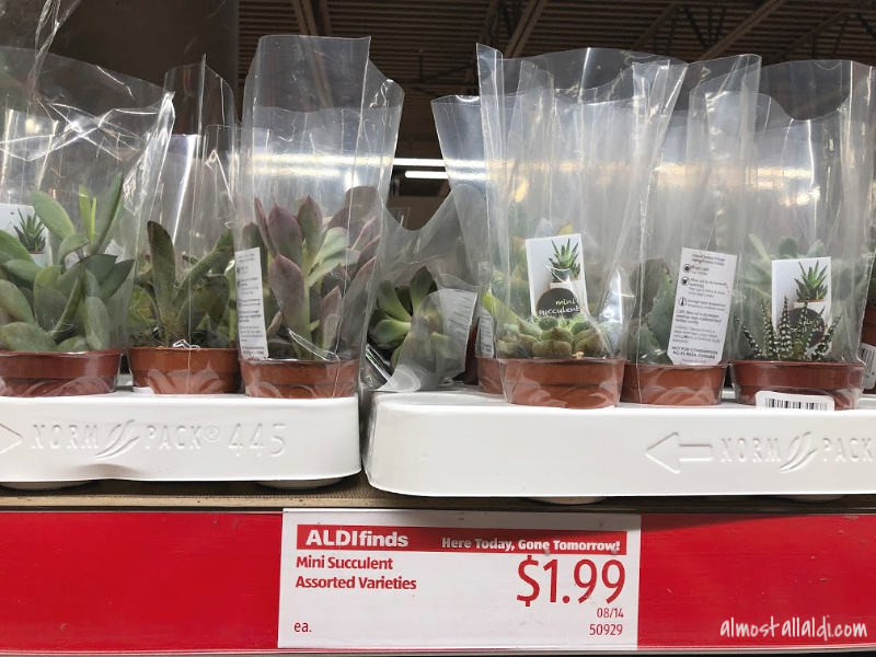 Succulent ALDI Finds, plus avocado holders, taco plates, waffle makers, and more!