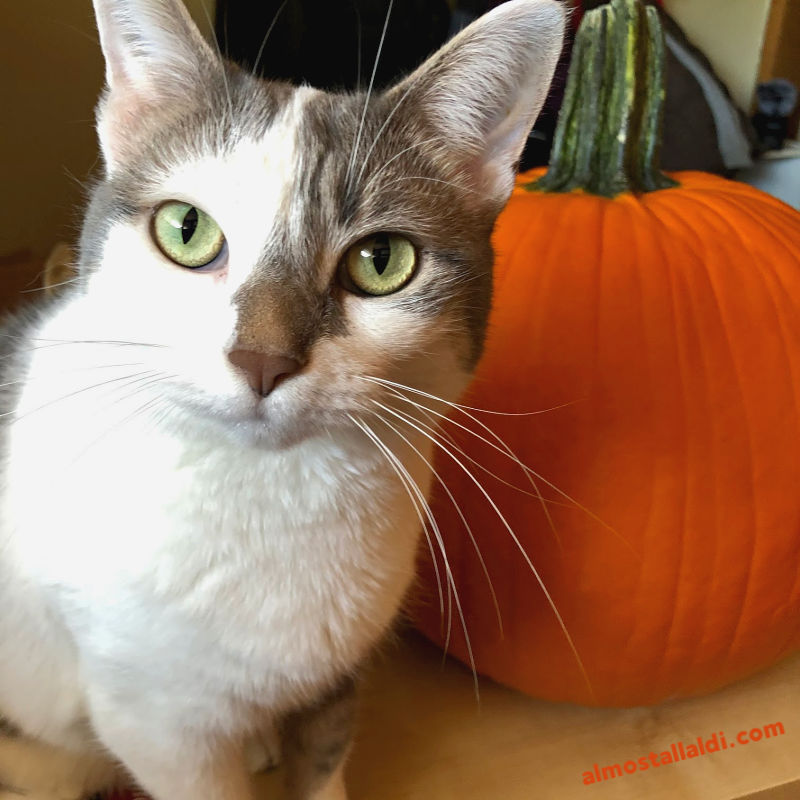Cheap pumpkins at ALDI continue… plus pet costumes, cute rain boots, and more ALDI Finds!