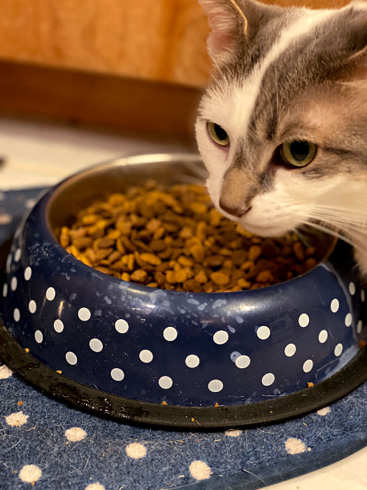 cat bowl and mat from aldi