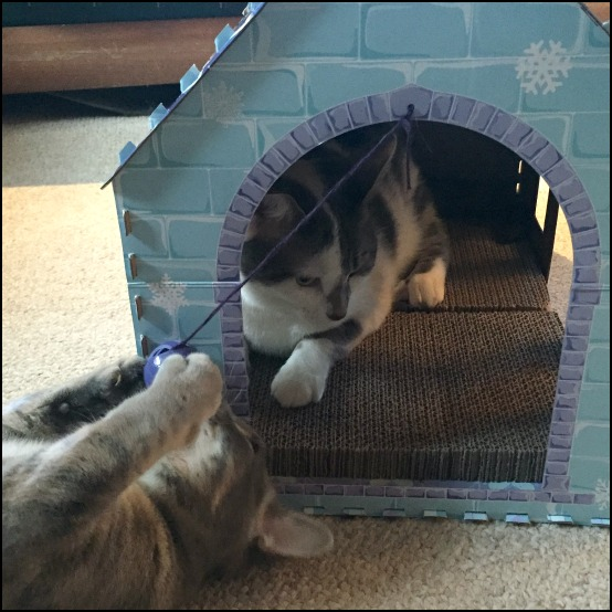 cat scratching house from aldi