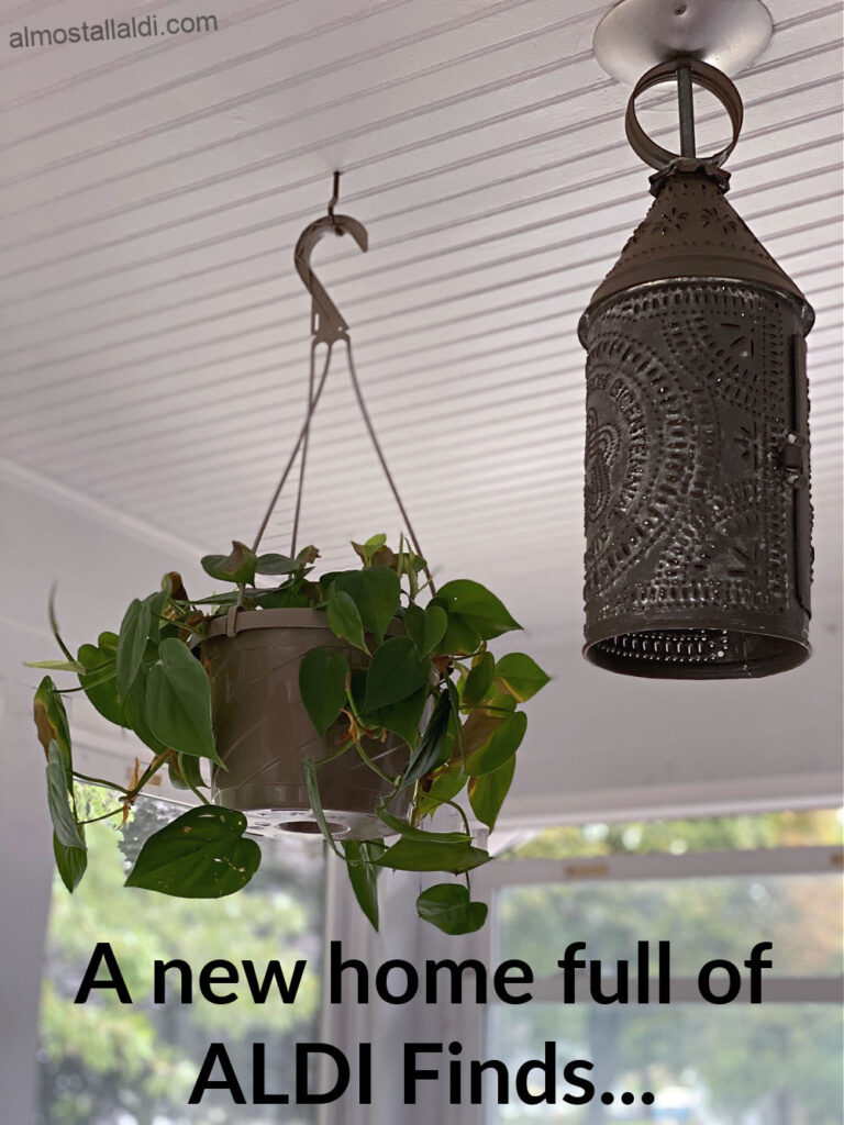 hanging plant from ALDI in my new home