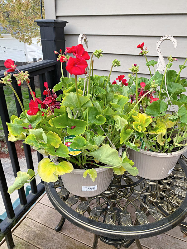 hanging baskets and more gardening fun in this week's ALDI Finds