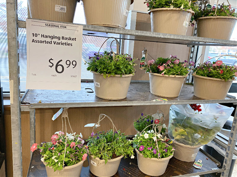 hanging baskets at ALDI for $6.99